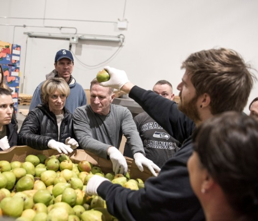 Volunteers sort fresh pears from the Yakima Valley
